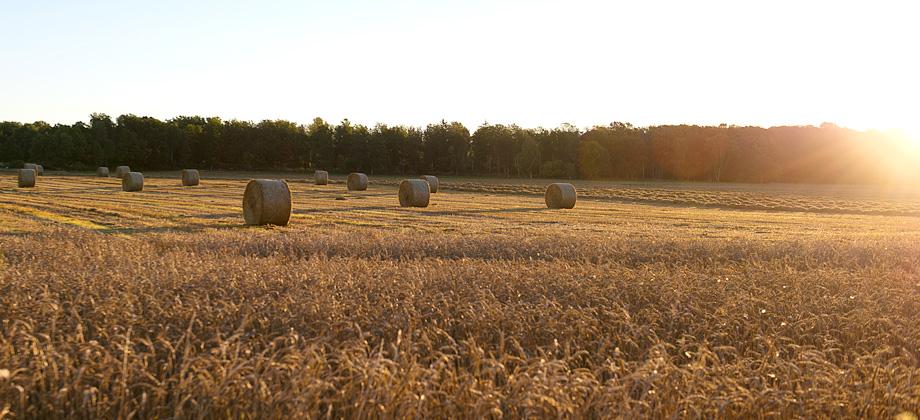 Välkommen till Eriksbo Park - ett naturnära boende utanför Västerås