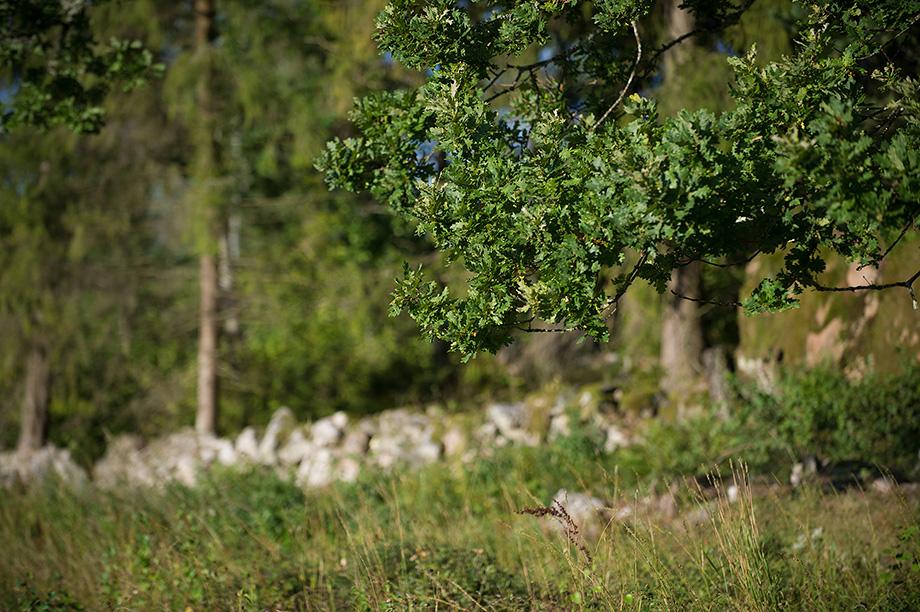 Gärdesgården vid skogen