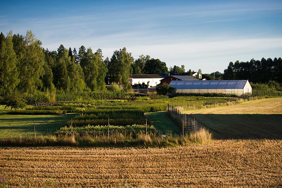 Eriksbo Plantskola på andra sidan åkern