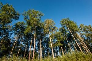 En del av skogen runt Eriksbo Park